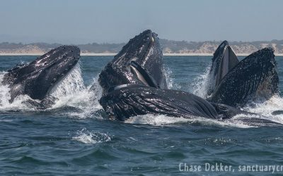Healing with the Whales Boat Trip in Moss Landing, CA: June 8th at 8am