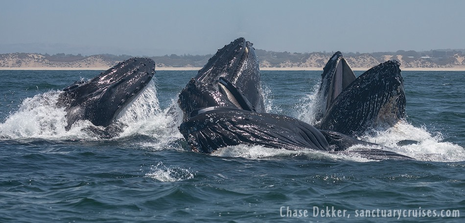Halloween Event: Healing & Channeling with the Whales Sunset Boat trip! Oct. 31st, 3-6pm in Moss Landing, CA